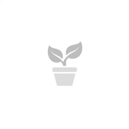 ODTOČNA PIPA PVC FI 4CM MALA- AGROLIT